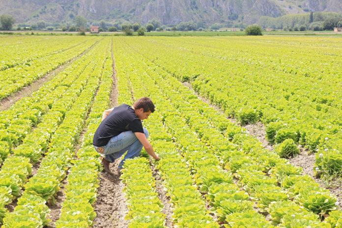 45,6 milioni di euro per l'insediamento di giovani agricoltori