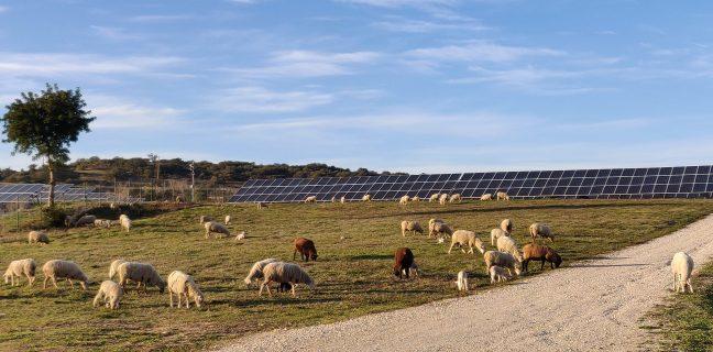 BNZ | Un nuovo operatore indipendente entra nel mercato del fotovoltaico