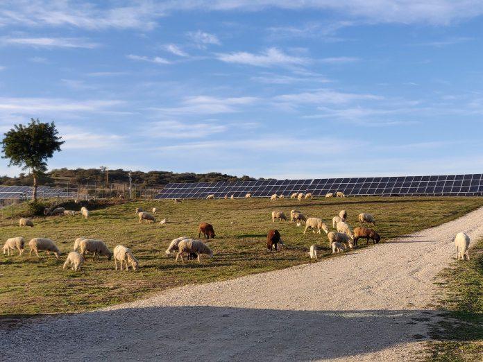 BNZ   Un nuovo operatore indipendente entra nel mercato del fotovoltaico
