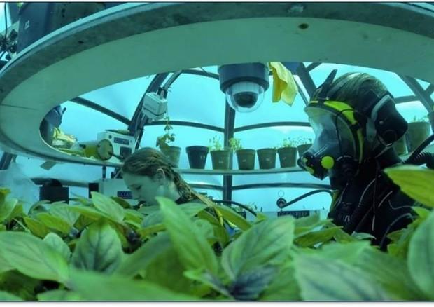 In Italia l'agricoltura diventa subacquea con l0orto di nemo
