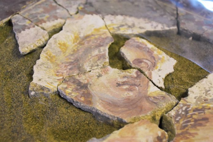 Pompei, robotica d'avanguardia ricompone frammenti di affreschi